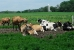 Atividade Agropecuária
